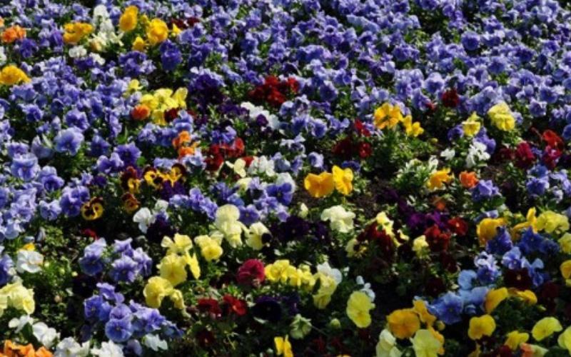 За цветни Нови Сад