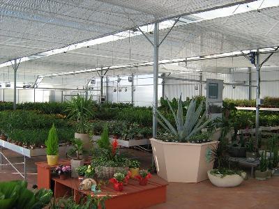 Нега биљака у зимском периоду